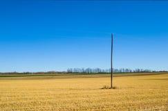 Zbierająca rolna uprawa Obrazy Royalty Free