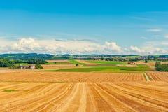 Zbierający pszeniczny pole Zdjęcie Royalty Free