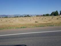 Zbierający siana pole w Kolorado Obraz Stock