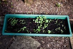 Zbiornika ogrodnictwa pomysły Domowy garnka ogrodnictwo Uprawiać ogródek w garnkach dla beginners Najlepszy ziemia dla zbiornika  Obrazy Stock
