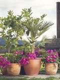 Zbiornika ogrodnictwo zdjęcie stock