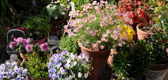 zbiornika ogrodnictwo Obraz Royalty Free