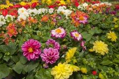 Ogrodowi sklepów kwiaty Zdjęcia Royalty Free