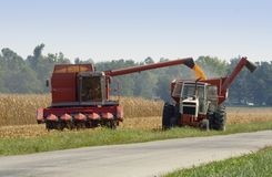 zbiory kukurydzy Zdjęcia Stock