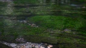 Zbliżenie jasnego wody przepływ nad algą zbiory