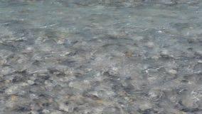 Zbliżenie jasnego wody przepływ nad skałą zbiory wideo