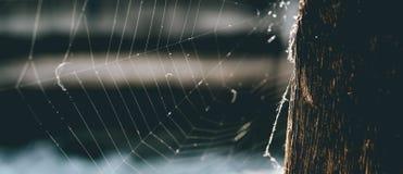 Zbliżenie pająka gniazdeczko na drewnianych schodkach plenerowych, sztandar zdjęcie stock