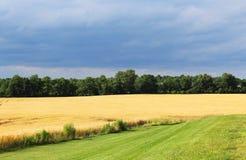 Zbliżać się burzę nad wheatfield Zdjęcie Stock