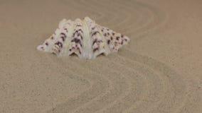 Zbliżać się pięknego seashell lying on the beach na falistym piasku zbiory wideo