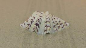 Zbliżać się seashell lying on the beach na otwartym piasku wykłada zbiory