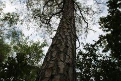 Zbliża wewnątrz drzewa w lesie Zdjęcia Stock