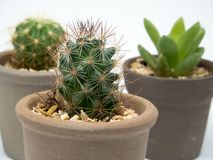 Zbliża wewnątrz kaktusy Zdjęcie Stock