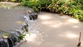 Zbliża wewnątrz strumienia wodnego sposób i zieloną rośliny wokoło zbiory wideo