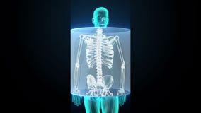 Zbliżający Ludzką kośćcową strukturę, skanuje kość system, Błękitny promieniowania rentgenowskiego światło ilustracja wektor