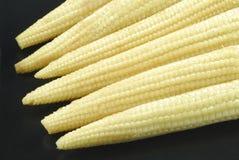 zbliżeń potomstwa kukurydzani mali Obraz Royalty Free