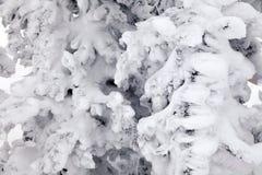 Zbliżeń sceniczny makro- widok nakrywający drzewa Pojęcie szwajcara Alps obrazy royalty free