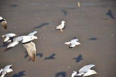 Zbliżeń seagulls Obraz Stock