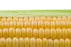 zbliżenia cob kukurudza odizolowywająca Zdjęcia Royalty Free