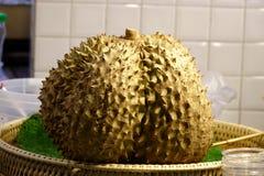 Zbliżenia Durian cierń zdjęcia stock