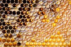 Zbliżenia honeycomb tło zdjęcia royalty free