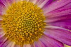 zbliżenia kolorów kwiatu czerwieni kolor żółty Obrazy Stock