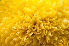 zbliżenia kolorów kwiatu czerwieni kolor żółty Zdjęcia Royalty Free