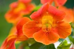 zbliżenia kwiatu grupy małpa Fotografia Stock