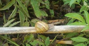 zbliżenia lekki naturalny natury obrazka ślimaczek Zdjęcia Stock