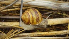 zbliżenia lekki naturalny natury obrazka ślimaczek Obraz Royalty Free