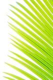 zbliżenia liść drzewko palmowe Fotografia Stock