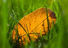 zbliżenia ostrości trawy zieleń selekcyjna Zdjęcie Stock