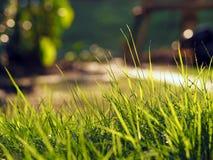 zbliżenia ostrości trawy zieleń selekcyjna Zdjęcie Royalty Free