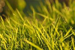 zbliżenia ostrości trawy zieleń selekcyjna Obrazy Royalty Free