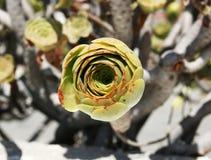 zbliżenia rośliny skała Fotografia Stock