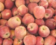 Zbliżenia rozsypiska słodcy świezi dojrzali czerwoni jabłka Owocowy backround zdrowa żywność Spadku żniwo, uprawia ziemię rolnicz fotografia stock