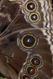 zbliżenia skrzydło Zdjęcia Royalty Free