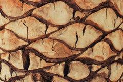 Zbliżenia tła tekstura egzotyczny drzewko palmowe Obraz Stock
