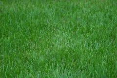 zbliżenia trawy zieleni gazon fotografia stock