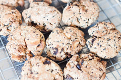 Zbliżenia zboża ciastka chłodzi na stojaku Fotografia Stock