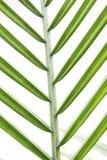 zbliżenia zielona liść tekstura Obraz Royalty Free