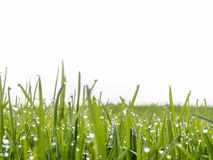 Zbliżenie łąka Zdjęcia Royalty Free