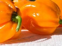 Zbliżenie świeża chillies Habanero pomarańcze Obrazy Royalty Free