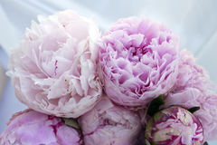 Zbliżenie świeża wiązka różowe peonie, peonia kwitnie Karta, dla poślubiać Fotografia Stock