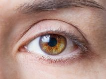 Zbliżenie żeński naturalny brown oko bez makeup Obrazy Stock