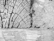 Zbliżenie abstrakcjonistyczny czarny i biały krakingowy drewniany tło Obrazy Stock