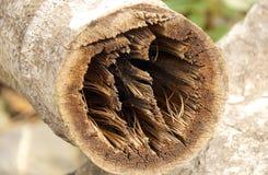 Zbliżenie bambusowa sekcja zdjęcia stock