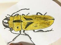 Zbliżenie barwiony ołówkowy rysunek ściga ilustracja wektor