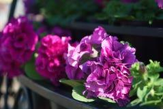 Zbliżenie boczny widok kwiaty z artystycznym kształtnym bokeh w b Zdjęcie Stock
