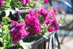 Zbliżenie boczny widok kwiaty z artystycznym kształtnym bokeh w b Fotografia Stock
