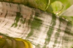 Zbliżenie Bromeliad fotografia stock